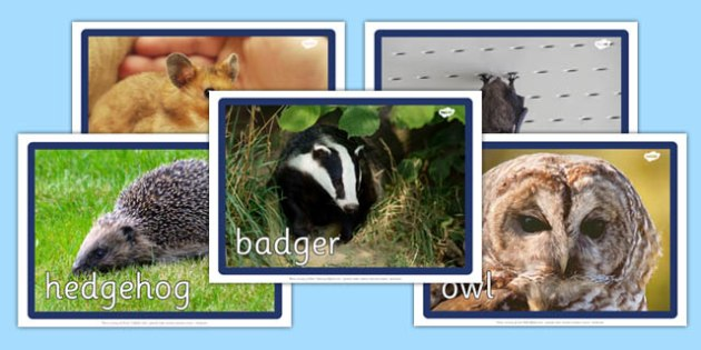 Nocturnal Animals Display Photos - nocturnal animals, display photos, display, photos