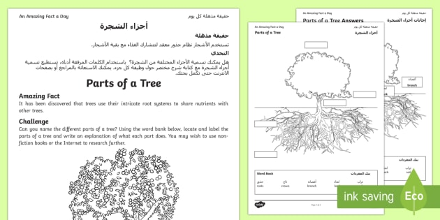 Parts of a Tree Activity Sheet Arabic/English - tree parts, tree knowledge, tree research, trunk, branch, amazing fact august, worksheet EAL Arabic,
