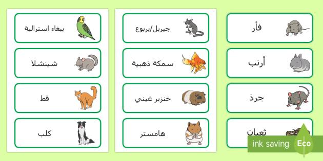 بطاقات كلمات أسماء حيوانات أليفة
