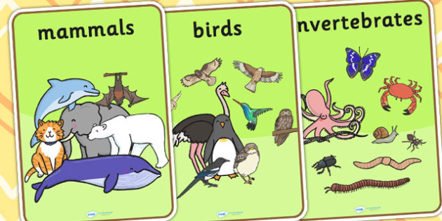 Animal Classes Display Posters - animal, classes, poster, display