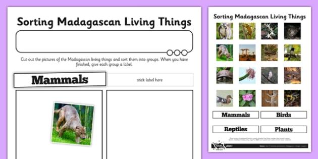 Sorting Madagascan Living Things Worksheet / Activity Sheet - living things, habitats, conservation, Madagascar, deforestation, rainforest, endangered, extinct, worksheet