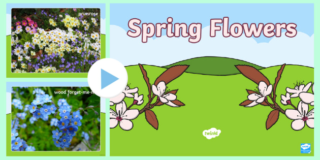 Spring Flowers Powerpoint Spring British Flowers Woodlands Woods