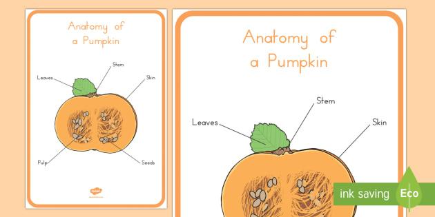 Anatomy of a Pumpkin Display Poster