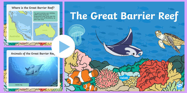 the great barrier reef powerpoint australia the great barrier reef sea life