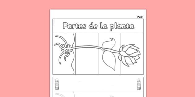 Ayuda visual Las partes de la planta - flor, crecimiento