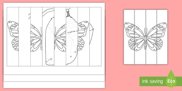 630 Top Colouring Pages Butterfly Life Cycle , Free HD Download