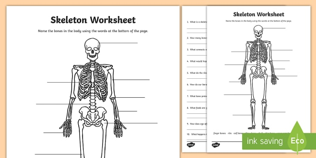 Parts of the Skeleton Worksheet (teacher made)