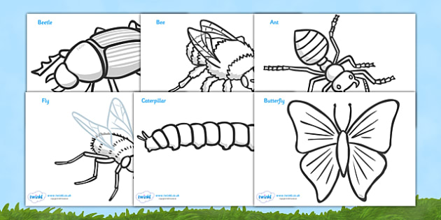 Minibeasts Colouring Sheets (Detailed Version) -  Minibeast Posters, colouring, fine motor skills, Minibeasts, Topic, Foundation stage, knowledge and understanding of the world, investigation, living things, snail, bee, caterpillar, ladybird, butterf