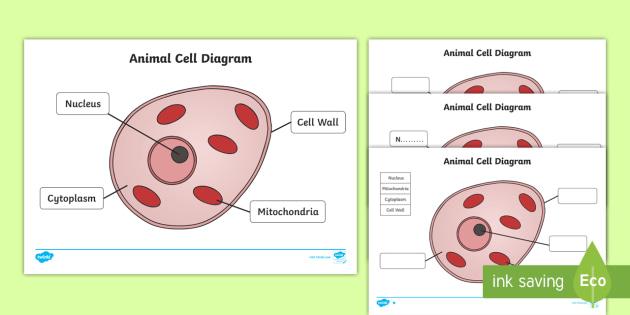 New animal cell diagram activity sheet animal cell diagram new animal cell diagram activity sheet animal cell diagram animal cell ccuart Image collections