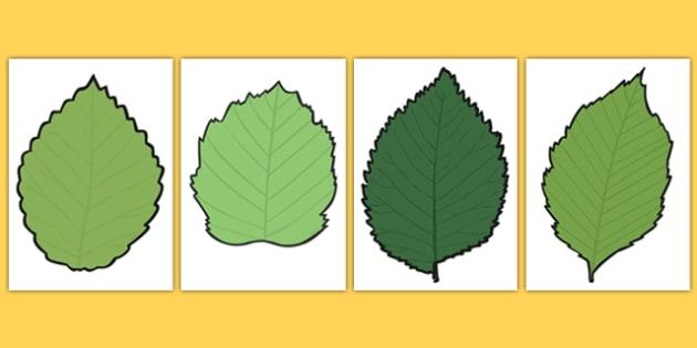 Leaf Templates  Blank Leaf Templates Autumn Display