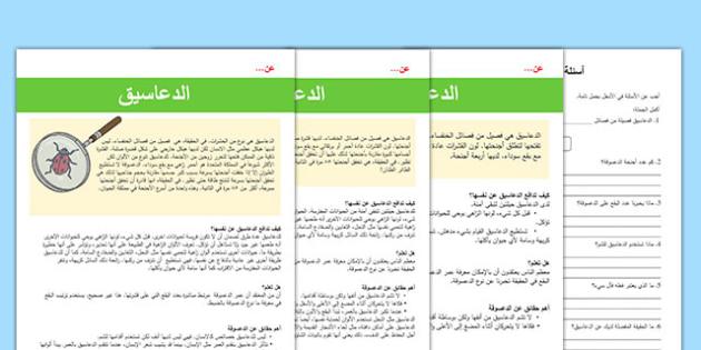 نشاط متمايز للقراءة والفهم عن دورة الدعسوقة
