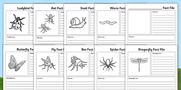 Minibeasts Fact File Sheets - minibeasts, fact file, sheets, fact, file