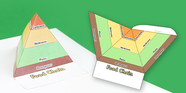 Food Chain Pyramids Foldable Visual Aid Template - food chain