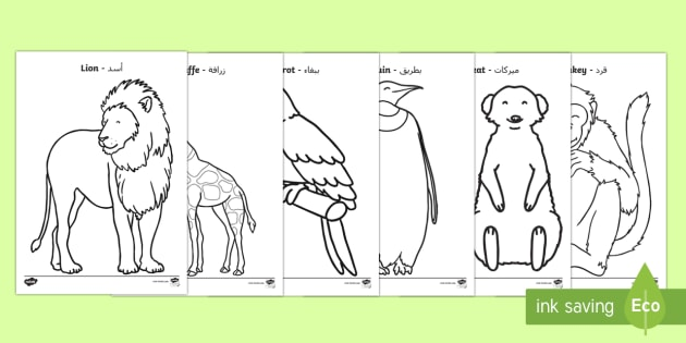 Zoo Animals Coloring Pages Arabic/English (teacher Made)