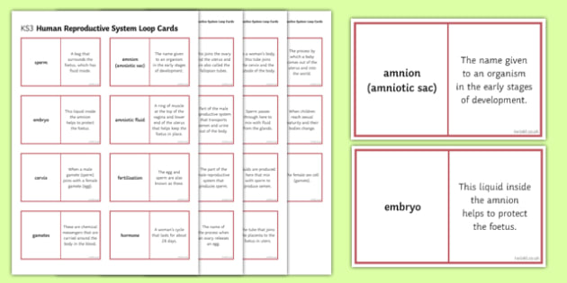 Human Reproductive System Loop Cards