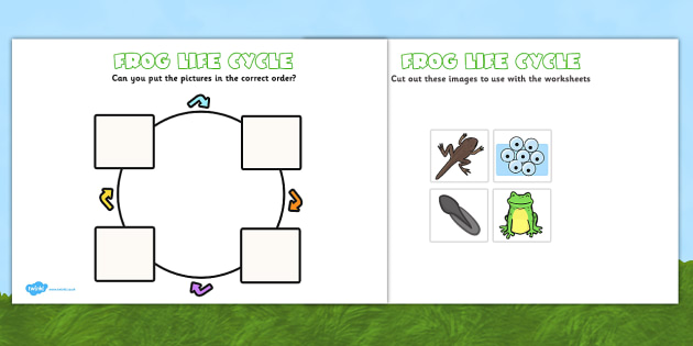 Frog Life Cycle Cut And Paste Frogspawn Tadpole