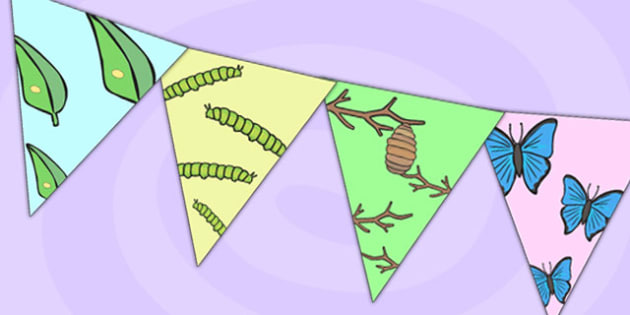Butterfly Lifecycle Display Bunting - life cycles, lifecycle