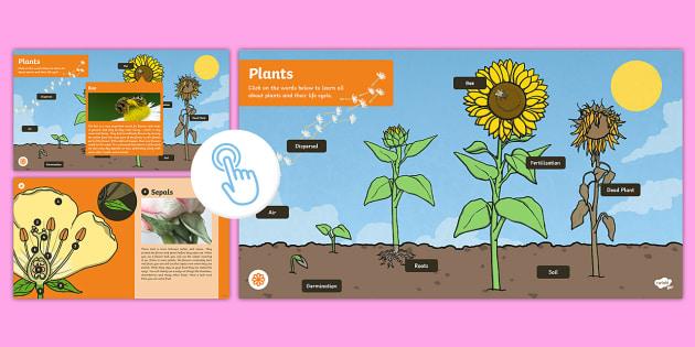 Plants Interactive eBook - year 3, interactive, science, pdf, plants, growing, science, ks2, Twinkl Go, twinkl go, TwinklGo, twinklgo