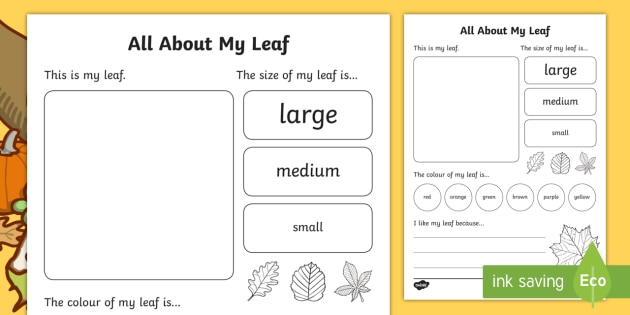 Leaves and Leaf Anatomy   EnchantedLearning in addition Structure of a Leaf   YouTube further Leaf Anatomy Worksheet Luxury All About Trees – anatomy of besides That's My Leaf   Lesson Plans   The Mailbox   Fall Fun   Pinterest moreover How to Do A Stem Leaf Diagram Best All Worksheets Stem and Leaf Plot additionally Grade 3 Garden Lesson Plan   Leaf Lesson  Plants and Nutrition… besides Happy Fall  Activities   Ideas for Autumn   Little Giraffes Teaching together with Why Do Leaves Change Color    biology   Pinterest   Science in addition Booklet for Plants we Eat Worksheets together with Leaf Worksheet   leaf worksheet  leaf  leaves  collecting also Stem and Leaf Plot Worksheet – How Do You Do Stem and Leaf Diagrams additionally Why Do Leaves Change Color In The Fall    ScienceBob as well Leaves Are Falling   Lesson Plan   Education     Lesson plan together with Leaf Investigation Printable Worksheet   A to Z Teacher Stuff besides All About My Family Tree And Leaf Worksheet Activity Sheet Template moreover All About My Leaf Worksheet   Activity Sheet   nz  new zealand. on all about a leaf worksheet