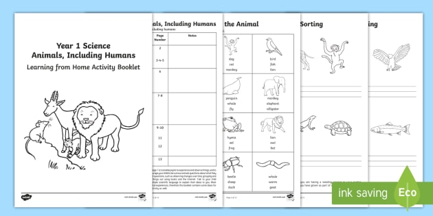 year 1 science learning from home animals including humans activity. Black Bedroom Furniture Sets. Home Design Ideas