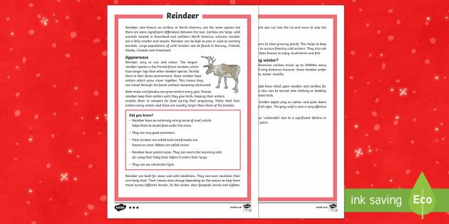 KS2 Reindeer Differentiated Fact File - Christmas, Nativity, Jesus, xmas, Xmas, Father Christmas, Santa, reindeer, caribou, fact file
