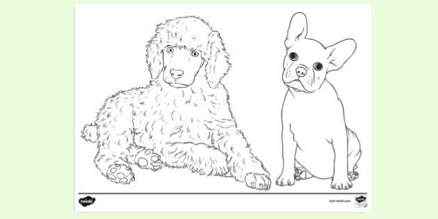 Free Puppy Colouring Colouring Sheets Teacher Made