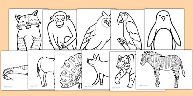 Animal Colouring Sheets - colouring, sheets, fine motor skills