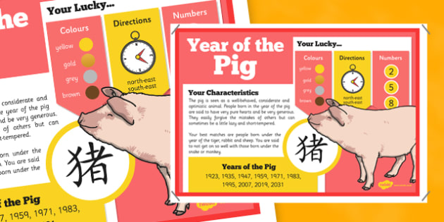 Chinese New Year of the Pig Display Poster - chinese new year, display poster, information, year of the pig