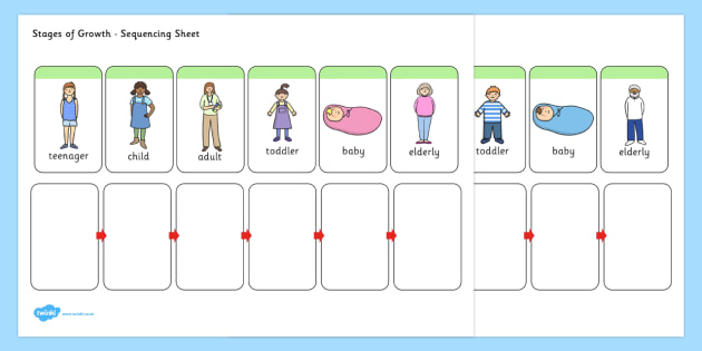 This is a simple human life cycle sequencing worksheet t ibookread
