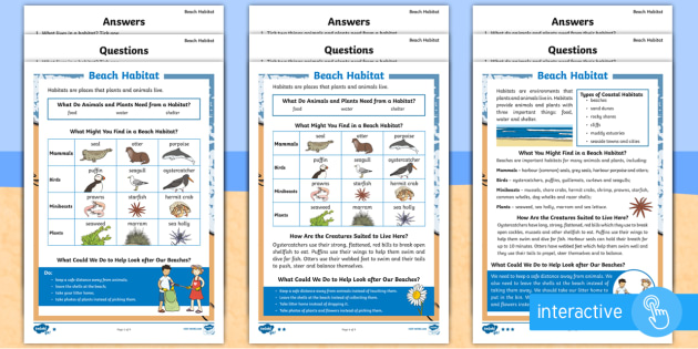 KS1 Beach Habitat  Differentiated Go Respond Activity Sheets - Seaside, Interactive, Lives, Plants, Animals