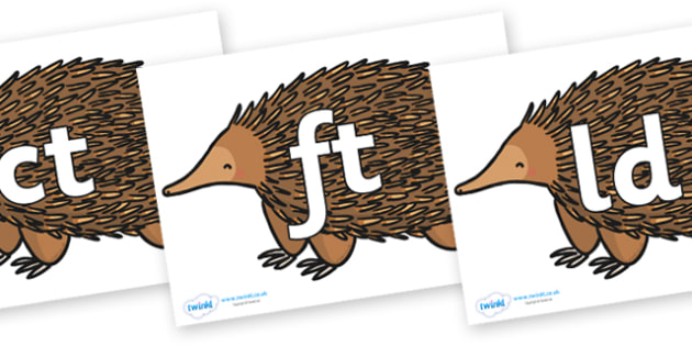 Final Letter Blends on Echidna - Final Letters, final letter, letter blend, letter blends, consonant, consonants, digraph, trigraph, literacy, alphabet, letters, foundation stage literacy