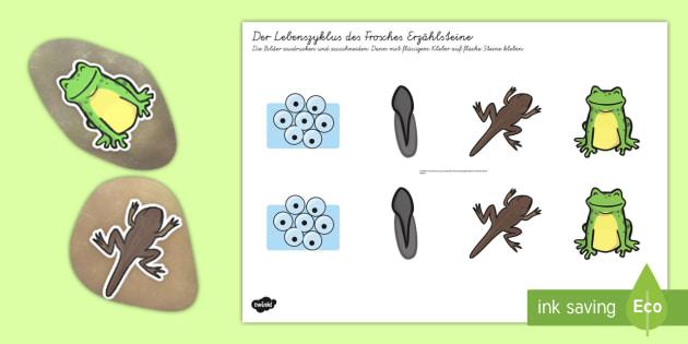 Der Lebenszyklus des Frosches Erzählsteine Arbeitsblatt: Erstes