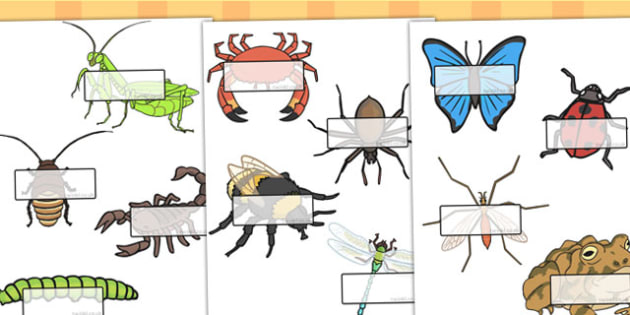 Minibeasts Self-Registration Detailed - self reg, sign, name tags