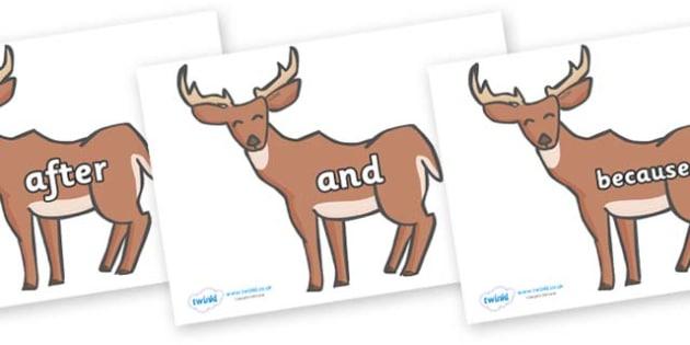 Connectives on Deer - Connectives, VCOP, connective resources, connectives display words, connective displays