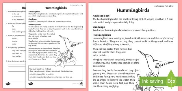 Hummingbird Comprehension Worksheet / Worksheet - worksheet ...