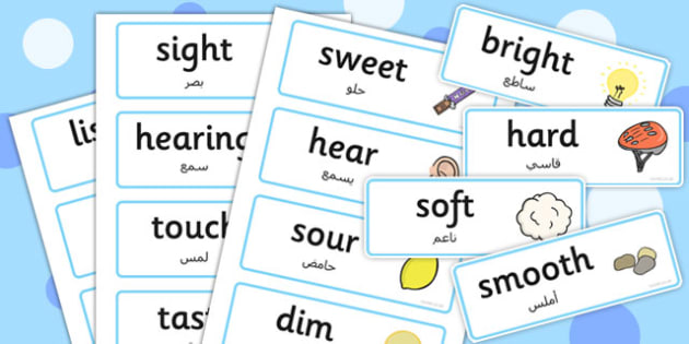 Senses Topic Words Arabic Translation - arabic, senses, topic