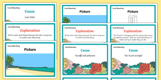 How We Can Look After the Reef Matching Cards - look after, how, great barrier reef, coral bleaching, matching cards