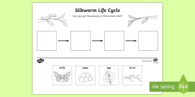 Silkworm Life Cycle Ordering Worksheet / Activity Sheet