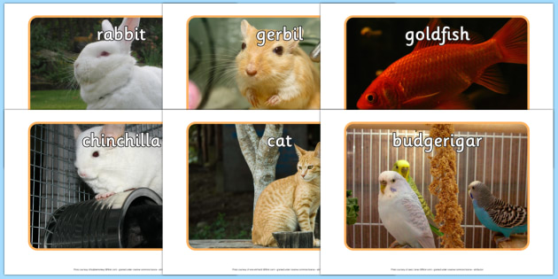 Pets Display Photos - Display Posters, Pets, A4, display, posters, rabbit, cat, dog, hamster, gerbil, rat, chincilla, mouse
