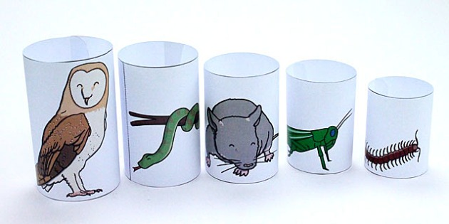 Food Chain Tubes Activity - food, chain, tubes, activity, craft