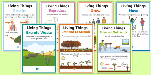 Characteristics Of Living Things A4 Poster Set Science Year 3 Living Non