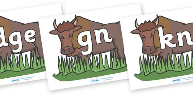 Silent Letters on Bison - Silent Letters, silent letter, letter blend, consonant, consonants, digraph, trigraph, A-Z letters, literacy, alphabet, letters, alternative sounds