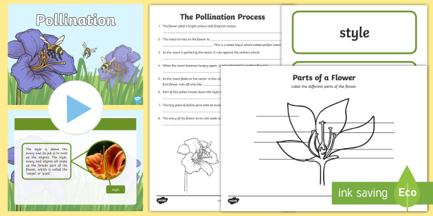 life cycle flower pollination task setter powerpoint pack life