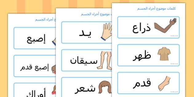 كلمات أجزاء الجسم عربي