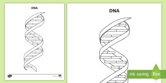 NEW * DNA Coloring Activity Sheet - Chemistry, Atoms
