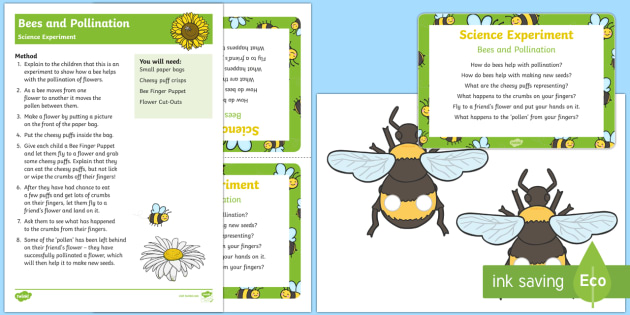 EYFS Bee and Pollination Science Experiment - bee, pollination, nectar