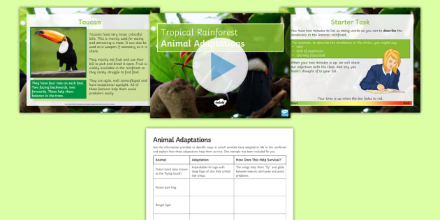 amazon rainforest animal adaptations powerpoint pack