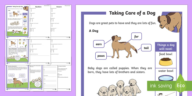 KS1 How To Look After a Dog Differentiated Reading Comprehension Activity - Pets, pet, EYFS, KS1, take, care, look, after, family, member, members, vet, vet surgery, surgery, i