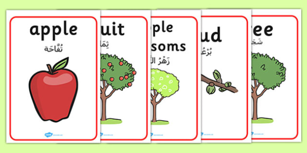 Apple Tree Life Cycle Growth Posters Arabic Translation - arabic, apple tree posters, apple tree life cycle posters, apple tree growth posters, posters, display posters