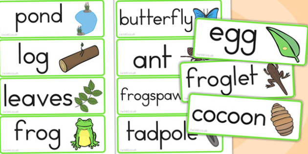 Life Cycle Word Cards - life cycles, lifecycle, visual aid, words